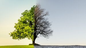 Magyarország 2020-ban is támogatta az ENSZ Éghajlatváltozási Kormányközi Testületének működését