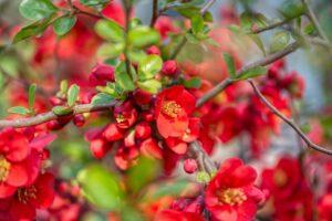 4 dekoratív lombhullató növény, mely terméseivel díszít!